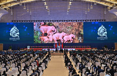 Countries urged to prevent mass extinction at UN biodiversity summit in China