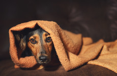 Soothing music and safe hiding places - Tips to help keep pets happy during fireworks