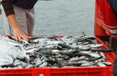 'Severe exploitation' of migrant fishers a daily recurrence, Oireachtas committee to hear