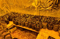 Gardaí seize €150,000 worth of suspected cannabis in Monaghan
