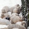 Thaw could prove fleeting as temperature due to drop again next week