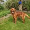 Dog rescue charity hosting 24-hour 'adoptathon'