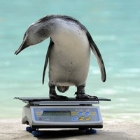 London Zoo keepers weigh and measure 16,000 animals