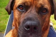 Dogs find new homes thanks to adoptathon