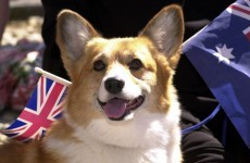9 people who were pretty sad about the Queen's corgi dying