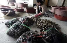 South Korea splashes out on floating toilets at shellfish farms