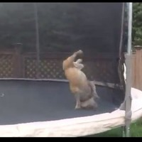 VIDEO: Dog on a trampoline, and bloody loving it
