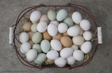 Should eggs be stored in the fridge? The Answer.