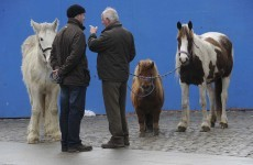 City Council plans to limit Smithfield horse fair to twice a year