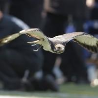Hawks secure Grand Final berth against Swans