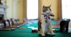 9 reasons why cats could rule Great Britain better than politicians