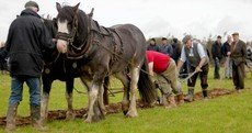 Enda at the ploughing before championships draw to a close