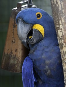 It's Friday so here's a slideshow of parrots from around the world!