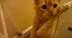 VIDEO: Eight weeks of kittens in five minutes