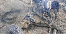 11-year-old goes wandering, stumbles across 30,000-year-old woolly mammoth