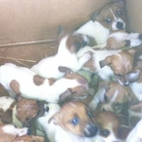 Fifty puppies found in Dublin cars in animal cruelty investigation