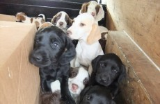 Rescued puppies will need homes...potential owners asked to register