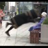 VIDEO: Bin* attacks old lady in South Dublin