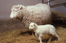 Dolly the sheep cloner Keith Campbell dies at 58