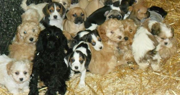 56 puppies rescued in second dog trafficking seizure