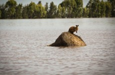 """Australia lashed by """"biblical floods"""" and bush fires"""