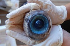 Experts name likely source of giant eyeball washed up in US