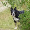 Twist of fate after lost dog is reunited with his family