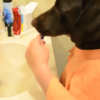 VIDEO: Hardworking dog is having a rough morning