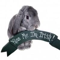 """Ara look at the poor craythur"" – a dictionary of odd Irish words"