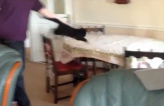 VIDEO: Cat learns never to trust a tablecloth