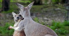 It's Friday so here's a slideshow of kangaroos from around the world