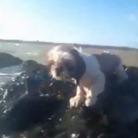 VIDEO: Puppy rescued from rising tide by paddle boarder