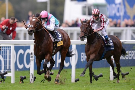 Frankel ridden by Tom Queally wins of the Qipco Champion Stakes from Cirrus Des Aigles.