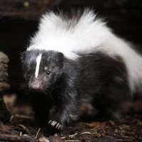 Costumed girl shot by relative after she is mistaken for skunk