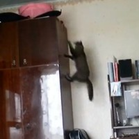 Epic video of cats getting into scrapes
