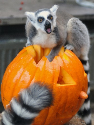 11 animals who are SO EXCITED about Halloween