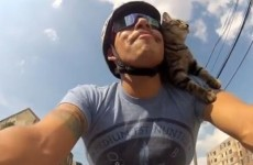 VIDEO: Cat riding around on a bike, and bloody loving it