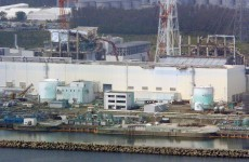 Fukushima fish radiation may indicate leak: study