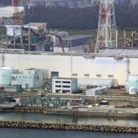 Fukushima fish radiation may indicate leak: study