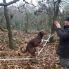 VIDEO: Look at this amazing acrobatic dog