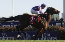 Breeders' Cup: O'Brien says Santa Anita should suit St Nic