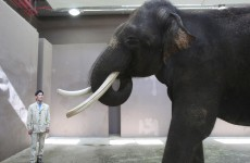 Elephant in South Korean zoo imitates human speech