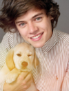 One Direction wearing jumpers and holding puppies