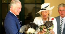 Charles and Camilla must be great craic… here's the evidence in pictures