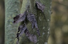 Further restrictions on ash imports imposed as disease continues to spread