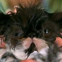Look at this kitten having a bath. You won't regret it