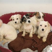 "ISPCA calls for ""consistent enforcement"" of dog breeding act"