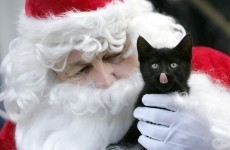 Adopt a pet this Christmas, don't buy one - DSPCA