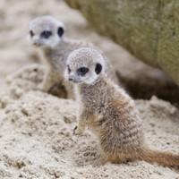 Photos: the cutest Dublin Zoo arrivals of 2012