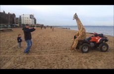 The best way to do good deeds? While dressed as a giraffe.